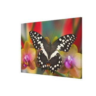 Sammamish, Washington Tropical Butterfly 15 Canvas Prints