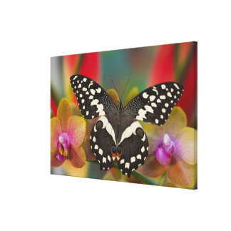 Sammamish, Washington Tropical Butterfly 15 Canvas Print