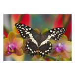 Sammamish, Washington Tropical Butterfly 15 Photo Art
