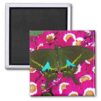 Sammamish, Washington Tropical Butterfly 16 Refrigerator Magnets
