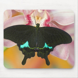 Sammamish, Washington Tropical Butterfly 17 Mouse Pad