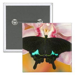 Sammamish, Washington Tropical Butterfly 17 Pinback Button