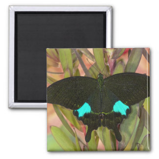 Sammamish, Washington Tropical Butterfly 18 2 Inch Square Magnet