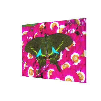 Sammamish, Washington Tropical Butterfly 21 Canvas Print