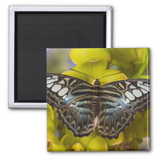 Sammamish, Washington Tropical Butterfly 23 2 Inch Square Magnet