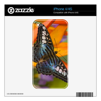 Sammamish, Washington Tropical Butterfly 24 Decals For iPhone 4