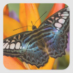 Sammamish, Washington Tropical Butterfly 24 Square Sticker