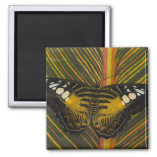 Sammamish, Washington Tropical Butterfly 25 2 Inch Square Magnet