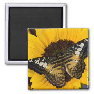 Sammamish, Washington Tropical Butterfly 27 2 Inch Square Magnet