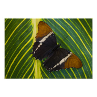 Sammamish, Washington Tropical Butterfly 28 Poster