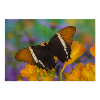 Sammamish, Washington Tropical Butterfly 29 Poster