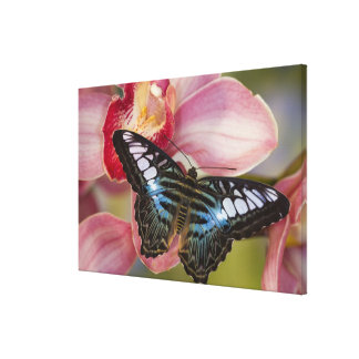 Sammamish, Washington Tropical Butterfly 2 Canvas Print