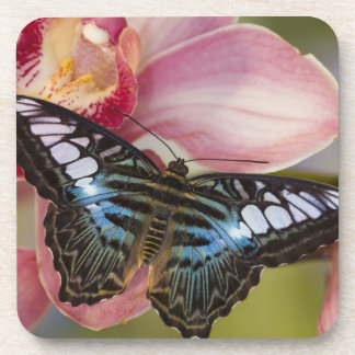 Sammamish, Washington Tropical Butterfly 2 Drink Coasters