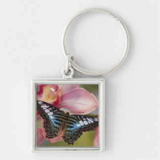 Sammamish, Washington Tropical Butterfly 2 Keychain
