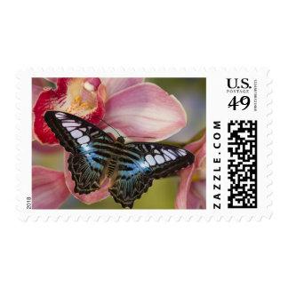 Sammamish Washington Tropical Butterfly 2 Postage