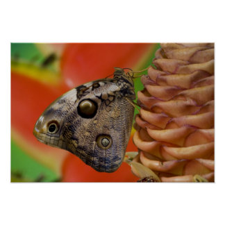 Sammamish, Washington Tropical Butterfly 2 Poster