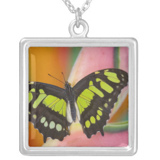 Sammamish, Washington Tropical Butterfly 32 Silver Plated Necklace