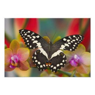 Sammamish, Washington Tropical Butterfly 33 Photo Print