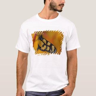 Sammamish, Washington Tropical Butterfly 33 T-Shirt