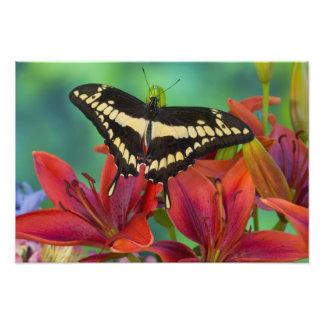 Sammamish, Washington Tropical Butterfly 34 Photographic Print