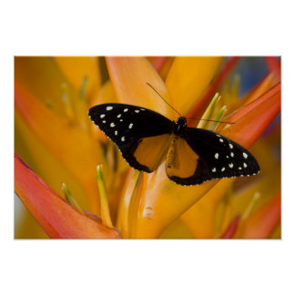 Sammamish, Washington Tropical Butterfly 35 Poster