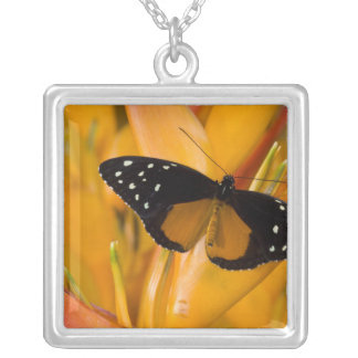 Sammamish, Washington Tropical Butterfly 35 Silver Plated Necklace