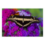 Sammamish, Washington Tropical Butterfly 36 Poster