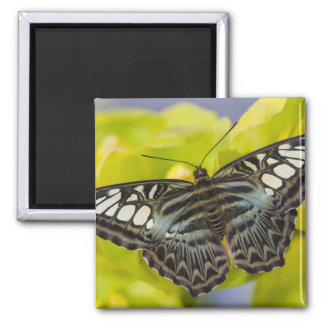 Sammamish, Washington Tropical Butterfly 38 2 Inch Square Magnet