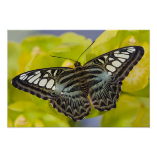 Sammamish, Washington Tropical Butterfly 38 Poster