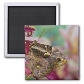 Sammamish, Washington Tropical Butterfly 3 2 Inch Square Magnet