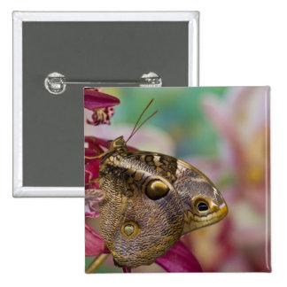 Sammamish, Washington Tropical Butterfly 3 Button
