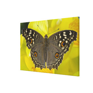 Sammamish Washington Tropical Butterfly 3 Canvas Print