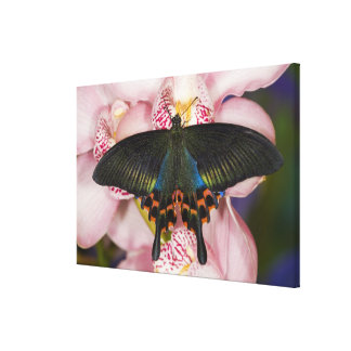 Sammamish, Washington Tropical Butterfly 3 Canvas Print