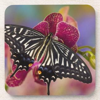 Sammamish, Washington Tropical Butterfly 3 Coasters