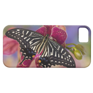 Sammamish, Washington Tropical Butterfly 3 iPhone SE/5/5s Case