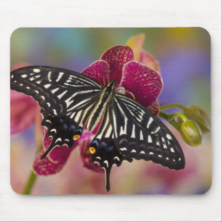 Sammamish, Washington Tropical Butterfly 3 Mouse Pads