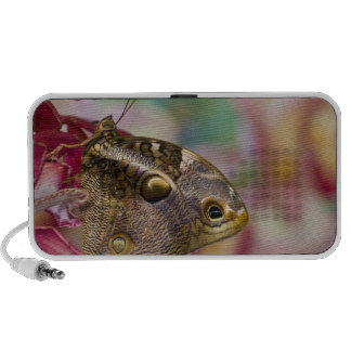 Sammamish, Washington Tropical Butterfly 3 Speaker