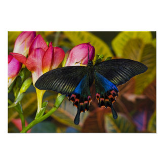 Sammamish, Washington Tropical Butterfly 40 Poster