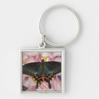 Sammamish, Washington Tropical Butterfly 41 Keychain