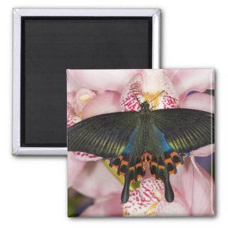Sammamish, Washington Tropical Butterfly 41 Fridge Magnets