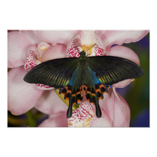 Sammamish, Washington Tropical Butterfly 41 Poster