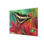 Sammamish, Washington Tropical Butterfly 42 Canvas Print