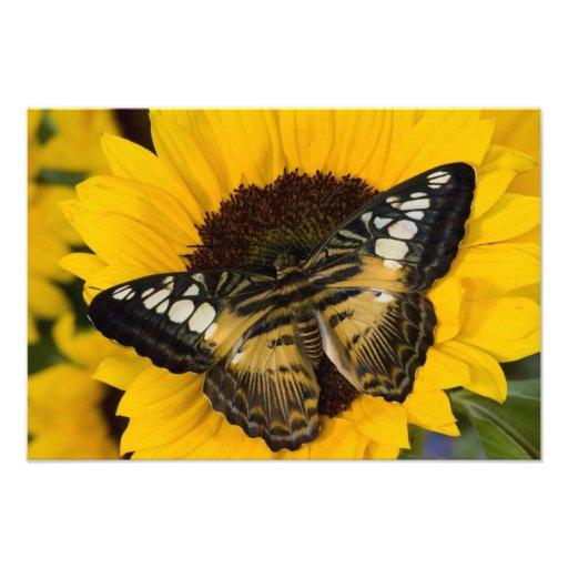 Sammamish, Washington Tropical Butterfly 42 Photo Print