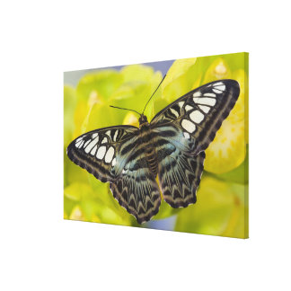 Sammamish, Washington Tropical Butterfly 43 Gallery Wrap Canvas