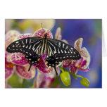 Sammamish, Washington Tropical Butterfly 43 Card