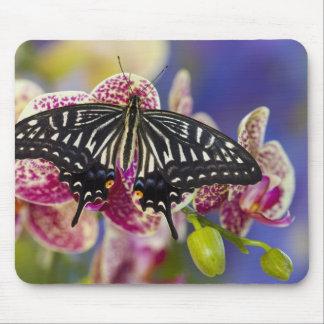 Sammamish, Washington Tropical Butterfly 43 Mousepad