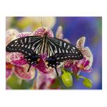 Sammamish, Washington Tropical Butterfly 43 Postcard