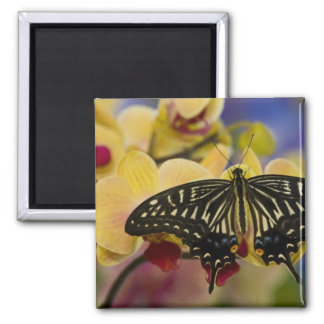Sammamish, Washington Tropical Butterfly 44 2 Inch Square Magnet