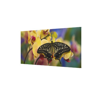 Sammamish, Washington Tropical Butterfly 44 Canvas Print