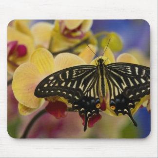 Sammamish, Washington Tropical Butterfly 44 Mousepads